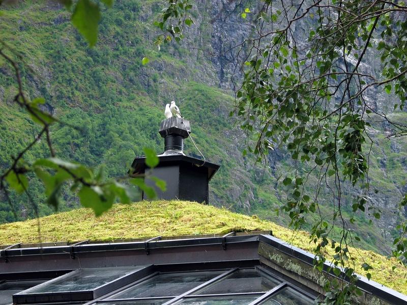 toiture v g talis e ou toit vert green roof en anglais maisoneco construction maison. Black Bedroom Furniture Sets. Home Design Ideas